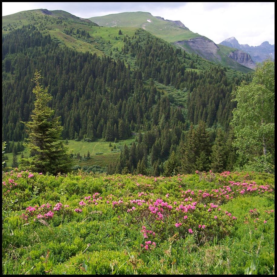 randonnée au pays du Mont-Blanc