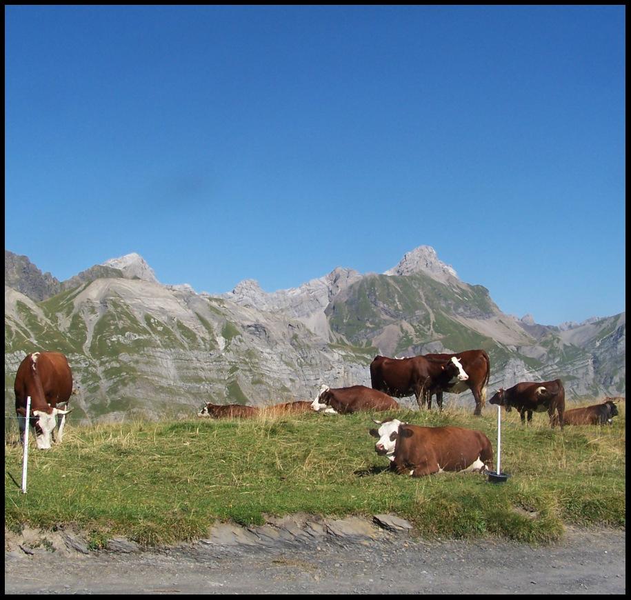 entre Aravis et Mont-Blanc